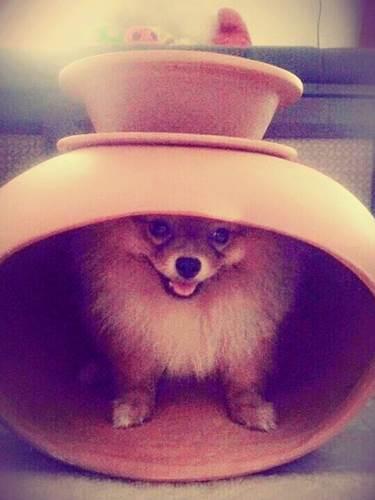 Dogilike.com :: จัดอันดับ 5 ไอเทมคลายร้อนที่ต้องมีให้น้องหมา!!