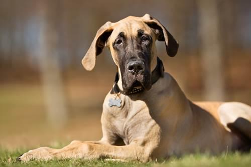 Dogilike.com :: จัดอับดับ 5 สายพันธุ์น้องหมาอึด ถึก ทนกับอากาศร้อน !
