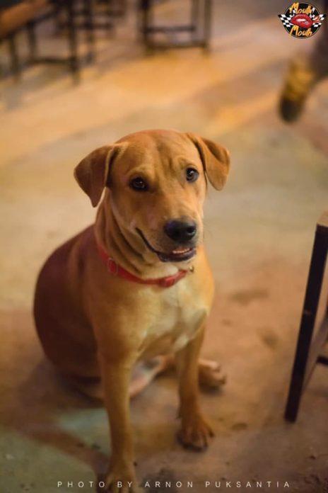 Dogilike.com :: เจอแล้ว! ทิดหำ หมาเล่นไดฟ์หน้ามึนกลางผับ ภาพแชร์สนั่นโซเชียล