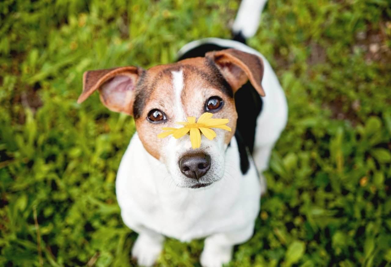 Dogilike.com :: เจ้าของต้องรู้! วิธีรับมือเมื่อน้องหมามีอาการ Reverse Sneezing