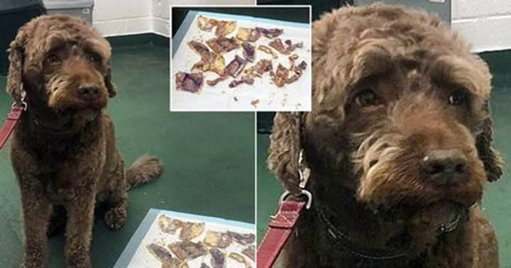 Dogilike.com :: เจ้าของปวดใจ! ตูบกินเงินสด 160 ปอนด์ลงท้อง ค่าผ่าตัดยังถูกกว่า