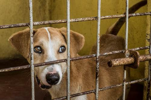 Dogilike.com :: ออสเตรเลียออก กม.ใหม่ สัตว์มีความรู้สึก เลี้ยงไม่ดีปรับสูงสุด 3 แสนบาท!