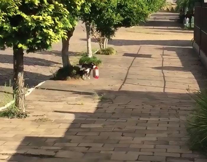 Dogilike.com :: ตูบบราซิลแสนรู้ไม่ง้อคนช่วย เดินเข้าร้านค้าคาบถุงอาหารกลับบ้านเอง! (คลิป)