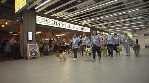 Dogilike.com :: ครั้งแรก! สนามบินอังกฤษเปิดตัวแก๊งน้องหมา ทำหน้าที่ลดเครียดก่อนขึ้นเครื่อง