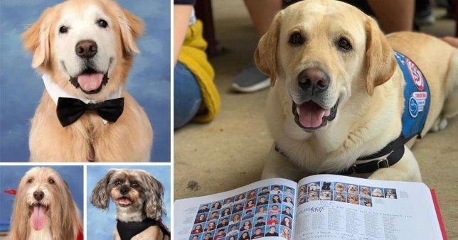 Dogilike.com :: รวมดาว! โรงเรียนมะกันยก 1 หน้าหนังสือรุ่นให้เจ้าตูบช่วยเหลือ 14 ตัว