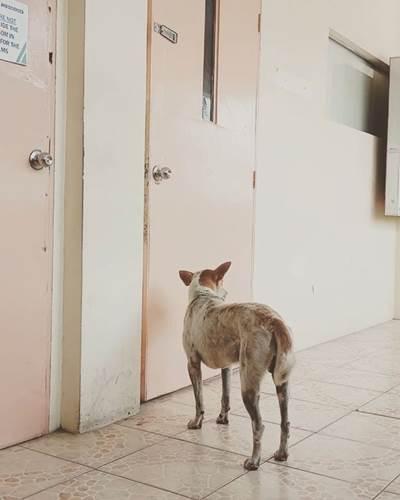 Dogilike.com :: ซื่อสัตย์! ตูบนั่งรอครูหนุ่มผู้ล่วงลับที่เคยให้ข้าวหน้าห้องเรียนทุกวัน
