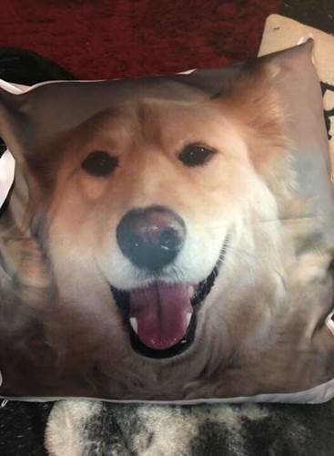 Dogilike.com :: เป็นหมาก็มีหัวใจ! ตูบคิดถึงเพื่อนรักที่ตายไป นอนกอดหมอนไม่ห่าง