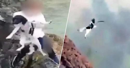 Dogilike.com :: ตำรวจอังกฤษตามล่าวัยรุ่นโยนหมาจากหน้าผาลงทะเล มีสิทธิติดคุก5ปี! (คลิป)