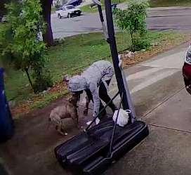 Dogilike.com :: วงจรปิดเผยนาทีหญิงเจ้าของผูกสุนัขทิ้งไว้ ก่อนเดินไปหน้าตาเฉย!