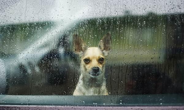 Dogilike.com :: จัดอันดับ 5 สิ่งที่ไม่ดีต่อใจน้องหมาในหน้าฝน !