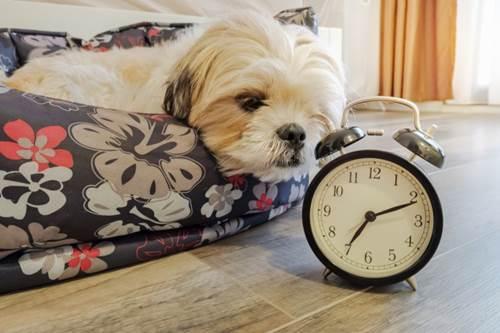 Dogilike.com :: เป็นอยู่ก็เลิกซะ ! 4 นิสัยเสียของเจ้าของที่ส่งผลกระทบถึงน้องหมา