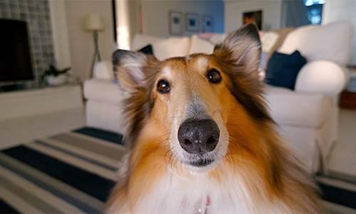 Dogilike.com :: จัดอันดับ 5 สถานการณ์ปวดตับ ใครไม่เลี้ยงหมาไม่เข้าใจหรอก !