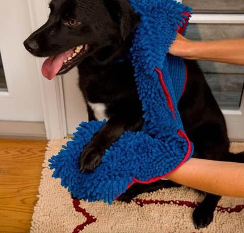 Dogilike.com :: จัดอันดับ 5 ไอเทมดีต่อใจ ช่วยน้องหมาไร้กลิ่นตัวในหน้าฝน !