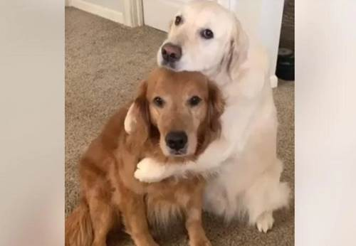 Dogilike.com :: น่ารัก! เจ้าตูบขโมยอาหารพี่ชาย สำนึกผิดเลยขอโทษแบบนี้ (คลิป)