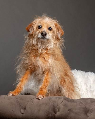 Dogilike.com :: สาวทุ่มเวลา 3 วันรับถ่ายรูปตูบกว่า 30 ตัว ระดมทุนไปช่วยเหลือสัตว์!