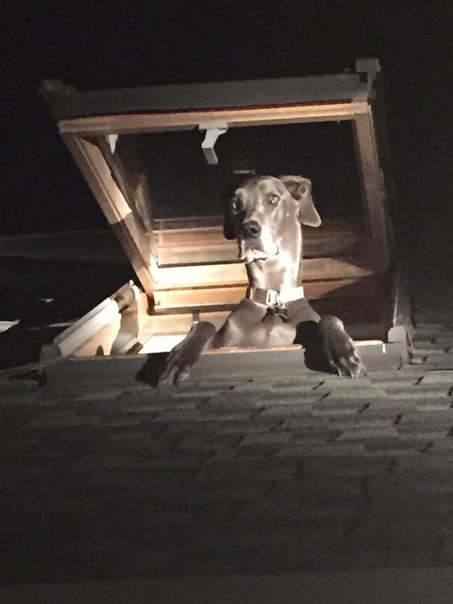 Dogilike.com :: จนท.หลุดขำหลังได้รับแจ้งมีผู้บุกรุกบ้าน พอไปตรวจดูกลับเจอแบบนี้ !