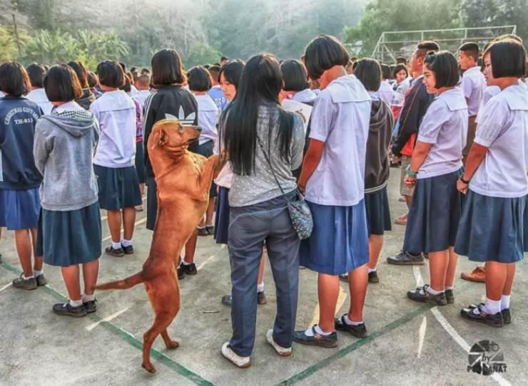 Dogilike.com :: รู้จัก �สมควร� ตูบชื่อดังแห่ง ร.ร.บ้านแม่สลิดหลวงวิทยา ทุกงานขาดเขาไม่ได้