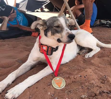 Dogilike.com :: ขวัญใจนักวิ่ง! ตูบสุดอึดร่วมวิ่งมาราธอนในทะเลทรายซาฮารา