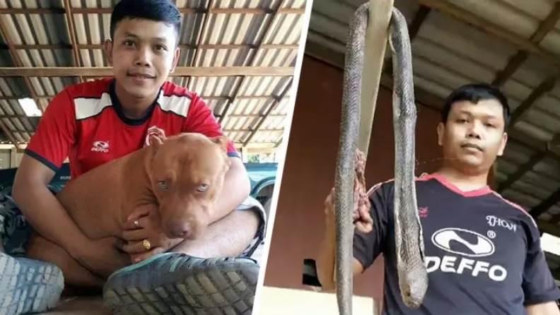 Dogilike.com :: เจ้าของเศร้า! พิตบูลแม่พันธุ์ฟัดงูเห่าเลื้อยเข้าบ้าน สุดท้ายตายทั้งคู่