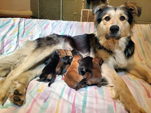 Dogilike.com :: สงสาร! พบแม่หมาพร้อมลูก 9 ตัว ถูกทิ้งในกล่องกระดาษปิดผนึก