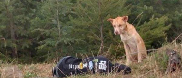 Dogilike.com :: ทำทุกทาง! สาวแกล้งนอนบาดเจ็บเพื่อผูกมิตร เข้าช่วยสุนัขจรจัด