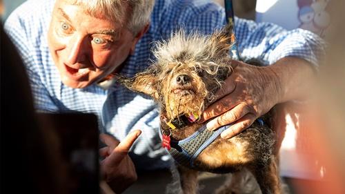 Dogilike.com :: เผยโฉม! สุนัขหน้าตาหน้าเกลียดที่สุดในโลกประจำปี 2019