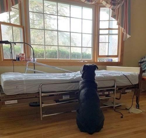 Dogilike.com :: เศร้า! เจ้าตูบตัวนี้นั่งข้างเตียงผู้ป่วย หวังให้เจ้านายที่จากไปกลับมา