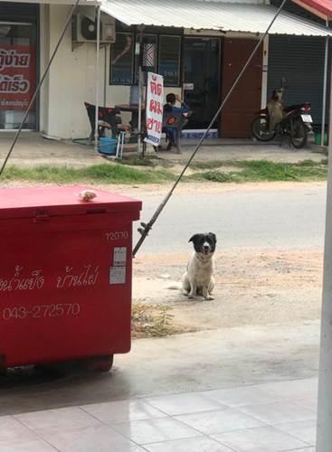 Dogilike.com :: เจ้าตูบพลัดตกจากรถ เจ้าของไม่รู้ตัว นั่งรออยู่ที่เดิมไม่ยอมไปไหน !