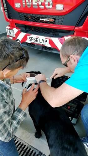 Dogilike.com :: คิดว่าตัวเล็ก! ลาบราดอร์สุดแสบหัวติดประตูแมว งานนี้ขอกู้ภัยช่วยด่วน