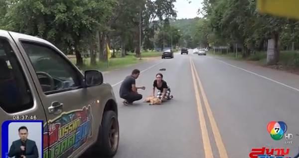 Dogilike.com :: นางฟ้าเดินดิน! ดี้ ปัทมา และครอบครัว ช่วยชีวิตเจ้าตูบโดนรถชน