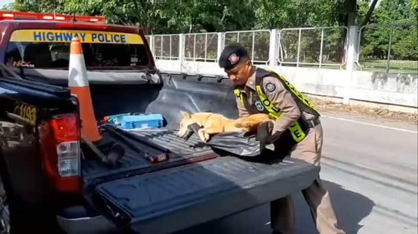 Dogilike.com :: ชาวเน็ตชื่นชม! ตร.ทางหลวงฮีโรช่วยชีวิตสุนัขจรจัดถูกรถชน