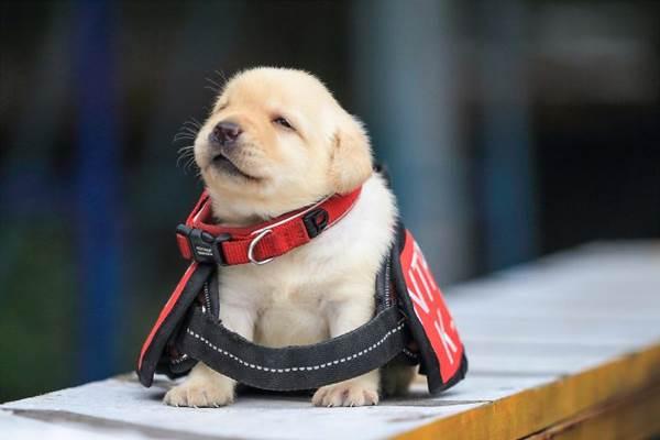 Dogilike.com :: เอ็นดู! หน่วยงานมะกันเปิดให้ประชาชนรับเลี้ยงตูบที่ไม่ผ่านการคัดเลือก