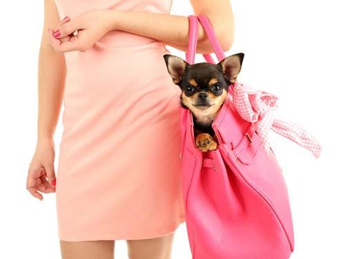 Dogilike.com :: 5 น้องหมาสายพันธุ์เล็ก มีพื้นที่น้อยก็เลี้ยงได้ !