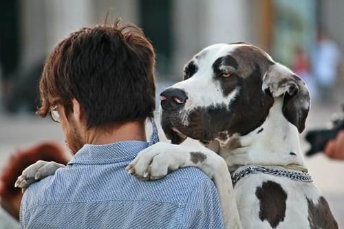 Dogilike.com :: จัดอันดับ 5 กิจกรรม ชวนน้องหมาทำแล้วได้บุญ !