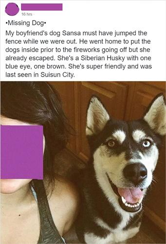 Dogilike.com :: อึ้ง! สาวโพสต์ตามหาฮัสกี้หาย เจอตัวอีกทีมีคนเอาไปขายบนเว็บ