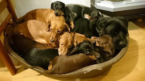 Dogilike.com :: หนุ่มโดนเพื่อนท้าให้จับตูบ 16 ตัวถ่ายรูป สุดท้ายผลออกมาเป็นแบบนี้!