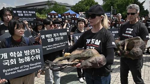 Dogilike.com :: คิม เบซิงเกอร์ นางเอกฮอลลีวูด ร่วมประท้วงการบริโภคเนื้อสุนัขที่เกาหลีใต้