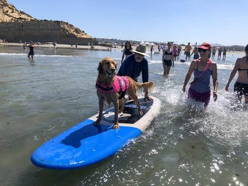 Dogilike.com :: เจ๋ง! แคลิฟอร์เนียเปิดค่ายสอนเล่นเซิร์ฟสำหรับเจ้าตูบ