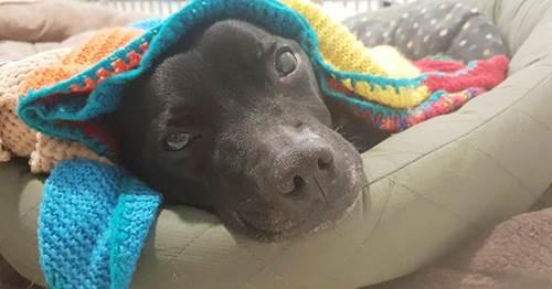 Dogilike.com :: อบอุ่นใจ! คุณย่าวัย 89 ปี ถักผ้าห่ม 450 ผืนให้สุนัขไร้บ้านในอังกฤษ
