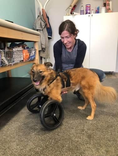 Dogilike.com :: ตูบถูกเจ้าของติดยาตัดขาทิ้งเพราะชอบขุดดิน แต่วันนี้มันมีชีวิตใหม่แล้ว !