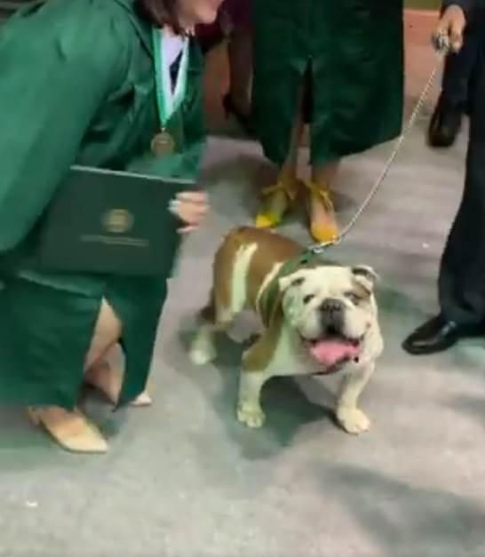 Dogilike.com :: บัณฑิตสาวขอถ่ายรูปกับสุนัขประจำมหาลัย แต่สุดท้ายดันเป็นแบบนี้ ! (คลิป)