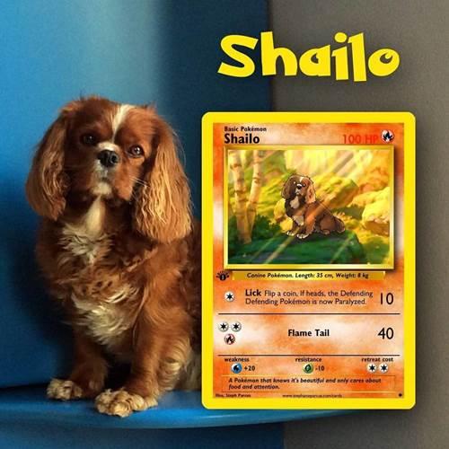 Dogilike.com :: น่ารักเกินไปแล้ว! ศิลปินบราซิลจับเหล่าสัตว์เลี้ยงมาอยู่ในการ์ดโปเกมอน