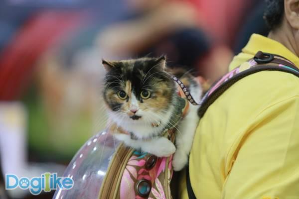 Dogilike.com :: Dogilike พาตะลุย Thailand International Dog Show 2019 ตอน 2