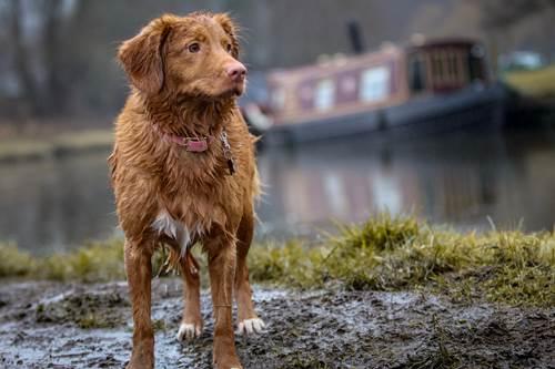 Dogilike.com :: ฝนนี้ต้องระวัง! ดูแลน้องหมาอย่างไร ให้ห่างไกลจากโรคผิวหนัง
