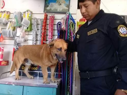 Dogilike.com :: ตำรวจเปรูรับเลี้ยงตูบจรฯ ให้สวมบทเป็นผู้ร้ายโชว์ตรวจค้นอาวุธ! (คลิป)