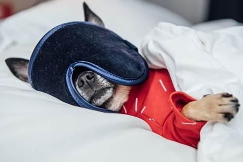 Dogilike.com :: อาชีพใหม่! เฟ้นหาเจ้าตูบนักวิจารณ์โรงแรม กินฟรีอยู่ฟรีระดับพรีเมี่ยม