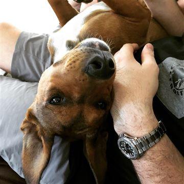 Dogilike.com :: ชีวิตใหม่! ลูกหมาที่เคยถูกทิ้งพร้อมโซฟาเก่า วันนี้มีบ้านที่อบอุ่นแล้ว