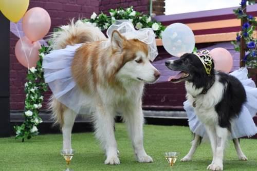 Dogilike.com :: น่ารัก! อังกฤษเอาใจเจ้าของ เปิดพื้นที่จัดงานแต่งสำหรับตูบสี่ขา