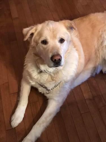 Dogilike.com :: เจ้าของสั่งการุณยฆาตหมาอ้วนเกิน แต่สัตวแพทย์ทำแบบนี้แทน!