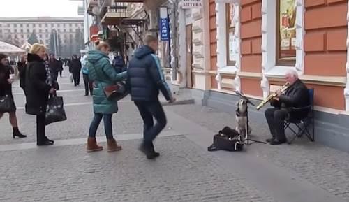Dogilike.com :: ตูบจรฯ เนียนนั่งร้องเพลงกับนักดนตรีเปิดหมวก งานนี้ได้ใจผู้ชมไปเต็มๆ! (คลิป)